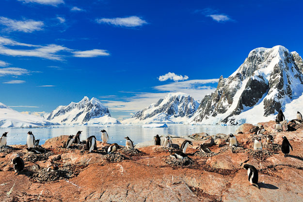 fly Antarctica and cruise