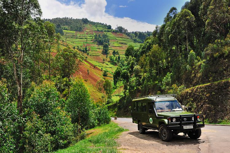 Volcanoes National Park Rwanda, Mountain Gorilla