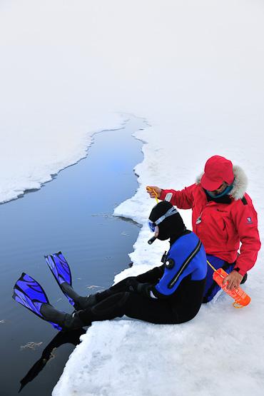 Bylot Island Nunavut Arctic Kingdom